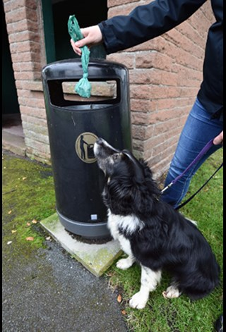 Dog watching dog poo bag being disposed of in a litter bin.