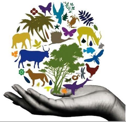 Biodiversity is in our hands